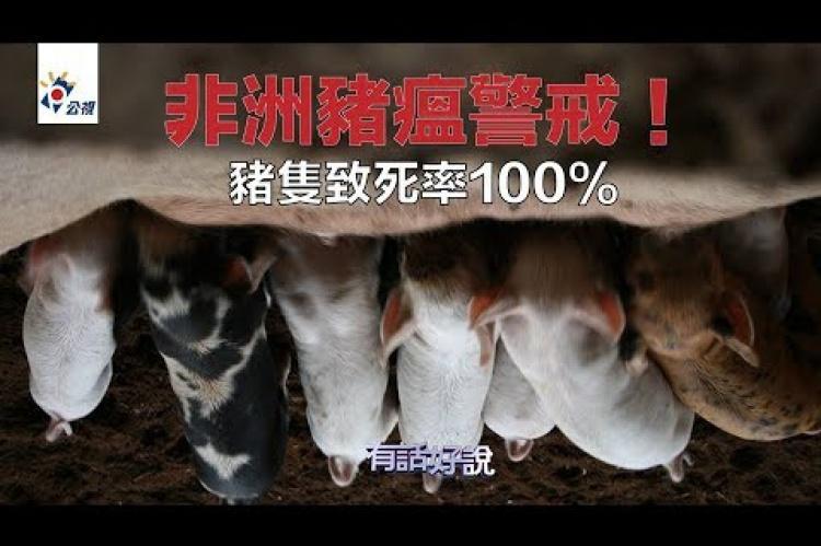 Embedded thumbnail for 非洲豬瘟全球蔓延 無疫苗沒藥醫 死亡率100%