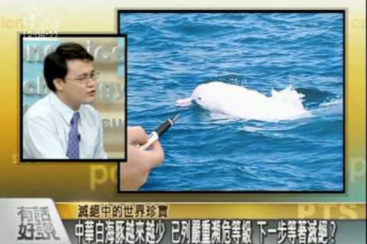 Embedded thumbnail for 滅絕中的台灣國寶-白海豚